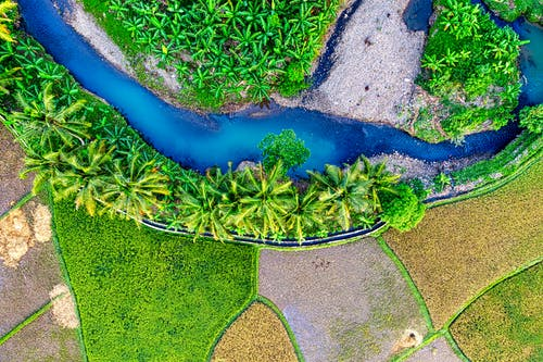 Spectacular drone view of curvy narrow river with turquoise water flowing amidst palm trees growing on rice paddy field in tropical countryside