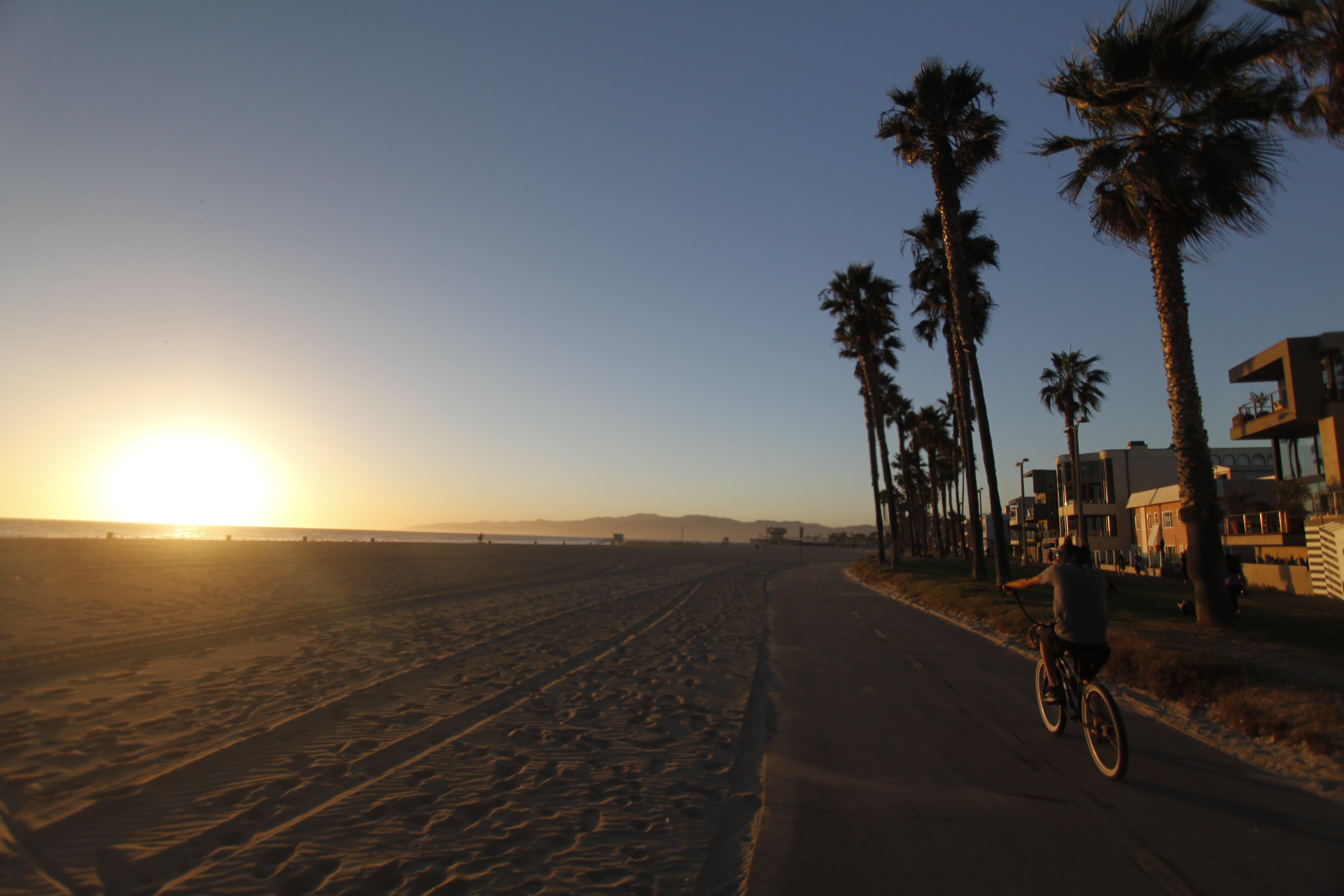Kostenloses Stock Foto zu fahrrad, los angeles, palmen, sonnenuntergang