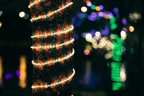 Illuminating multicolored garland on tree trunk in dark
