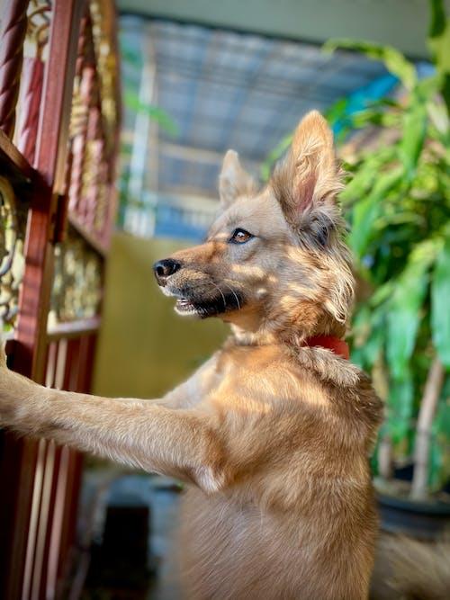 Ilmainen kuvapankkikuva tunnisteilla eläimet, koiranpentu, lemmikit