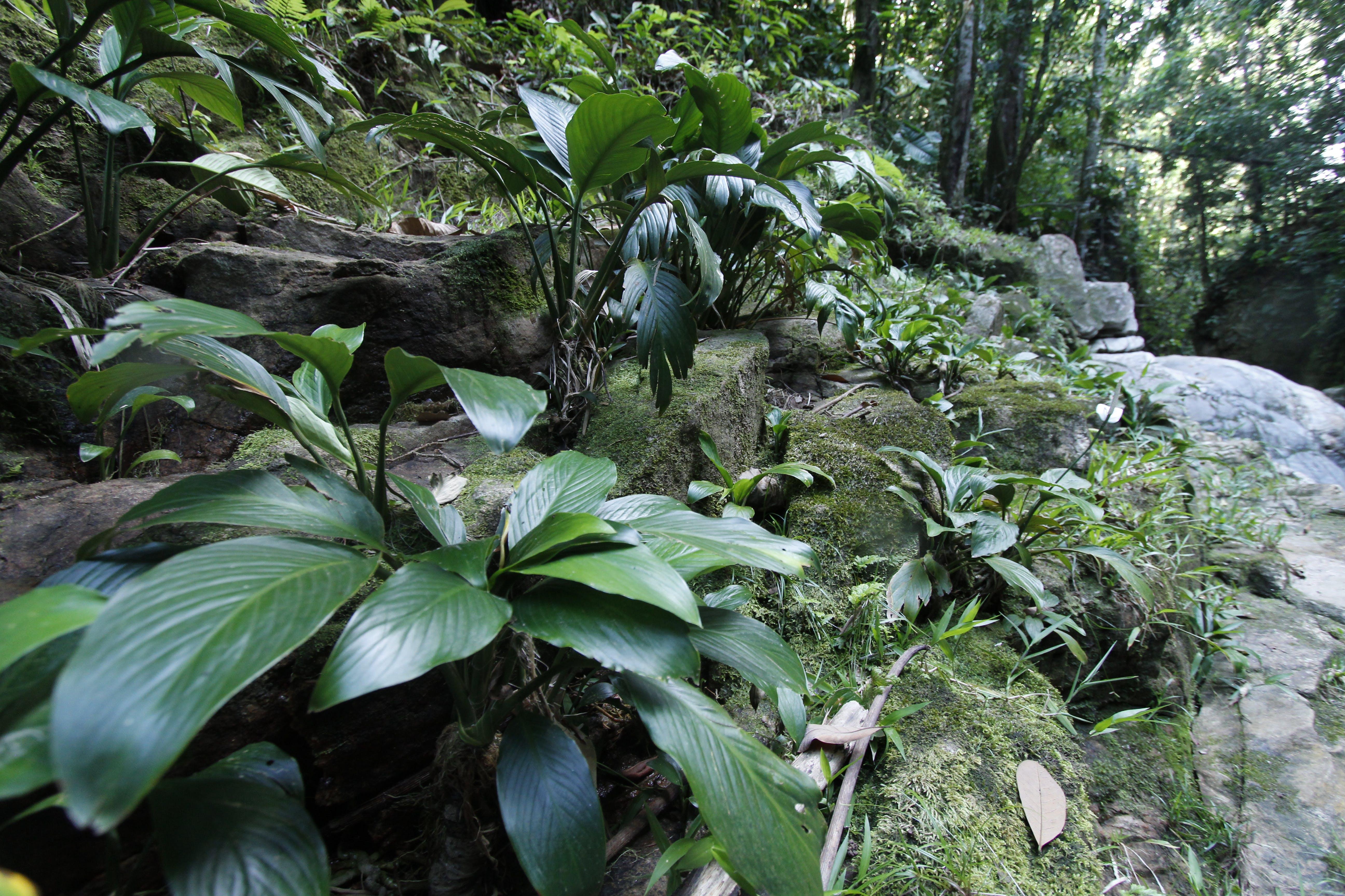 Kostenloses Stock Foto zu dschungel, fluss, kolumbien, pflanze