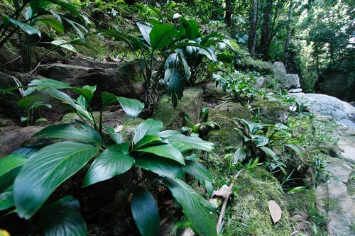 Fotos de stock gratuitas de colombia, jungla, planta