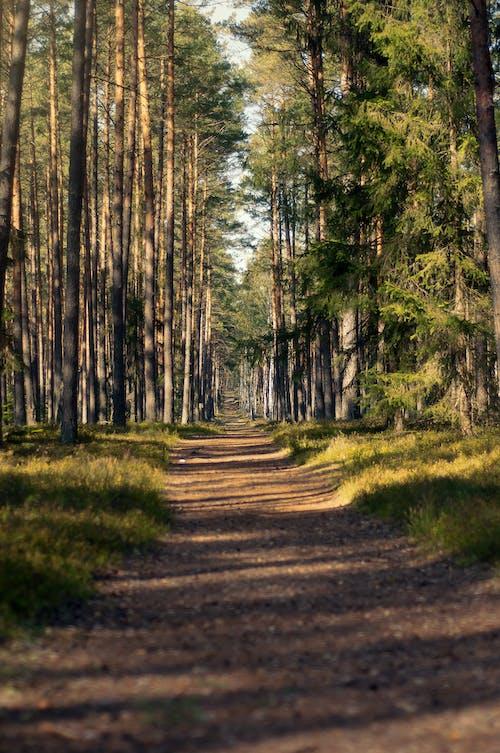 人行道, 土地, 地面 的 免费素材图片