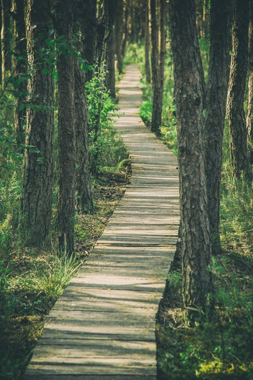 Empty narrow wooden pathway going among grassy terrain with tall tree trunks in dense woods on summer day in countryside