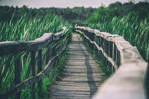 Wooden boardwalk between grassy area