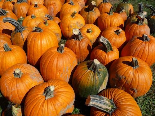 Free stock photo of orange, pumpkin