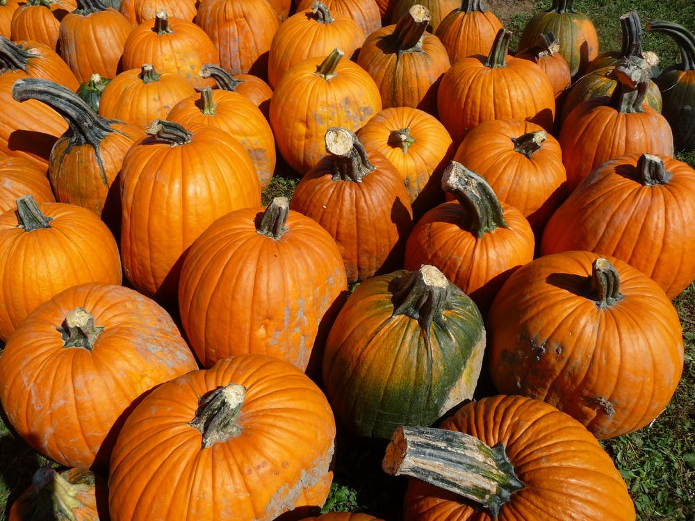 Free stock photo of orange, pumpkin