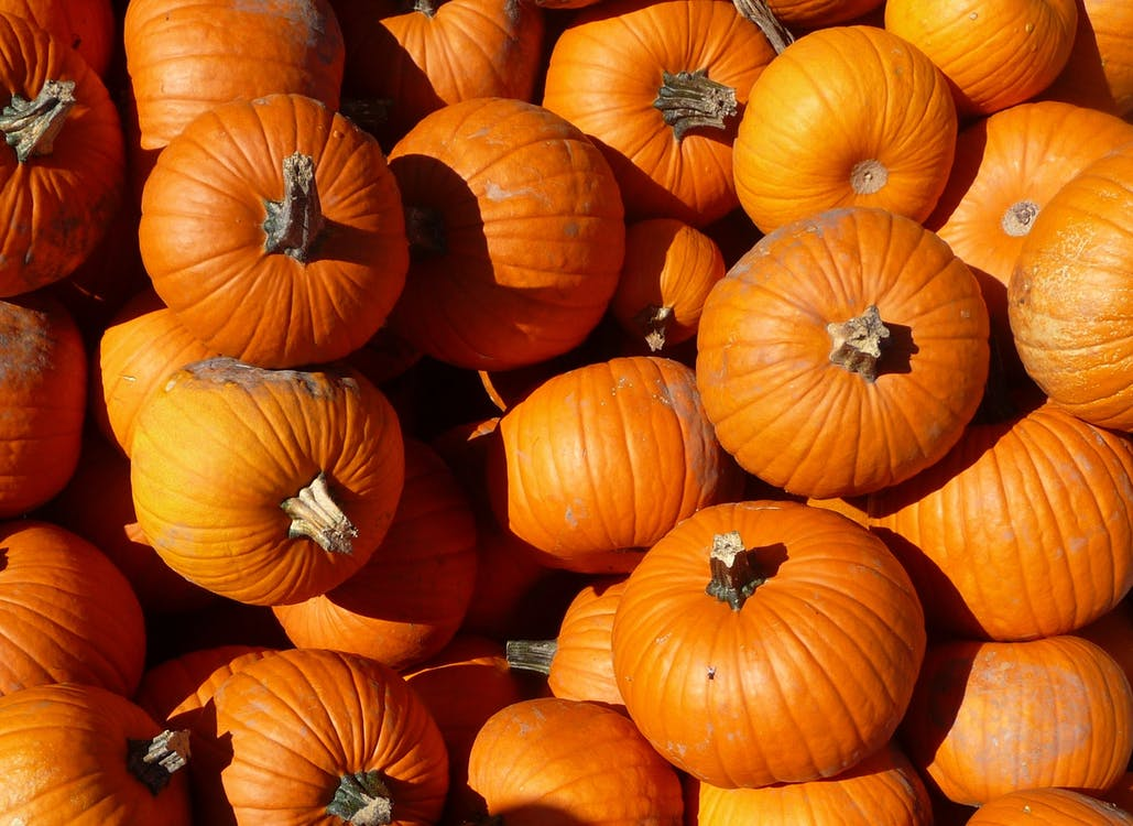 Free stock photo of pumpkin, pumpkin orange
