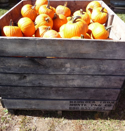 Free stock photo of crate, orange, pumpkins