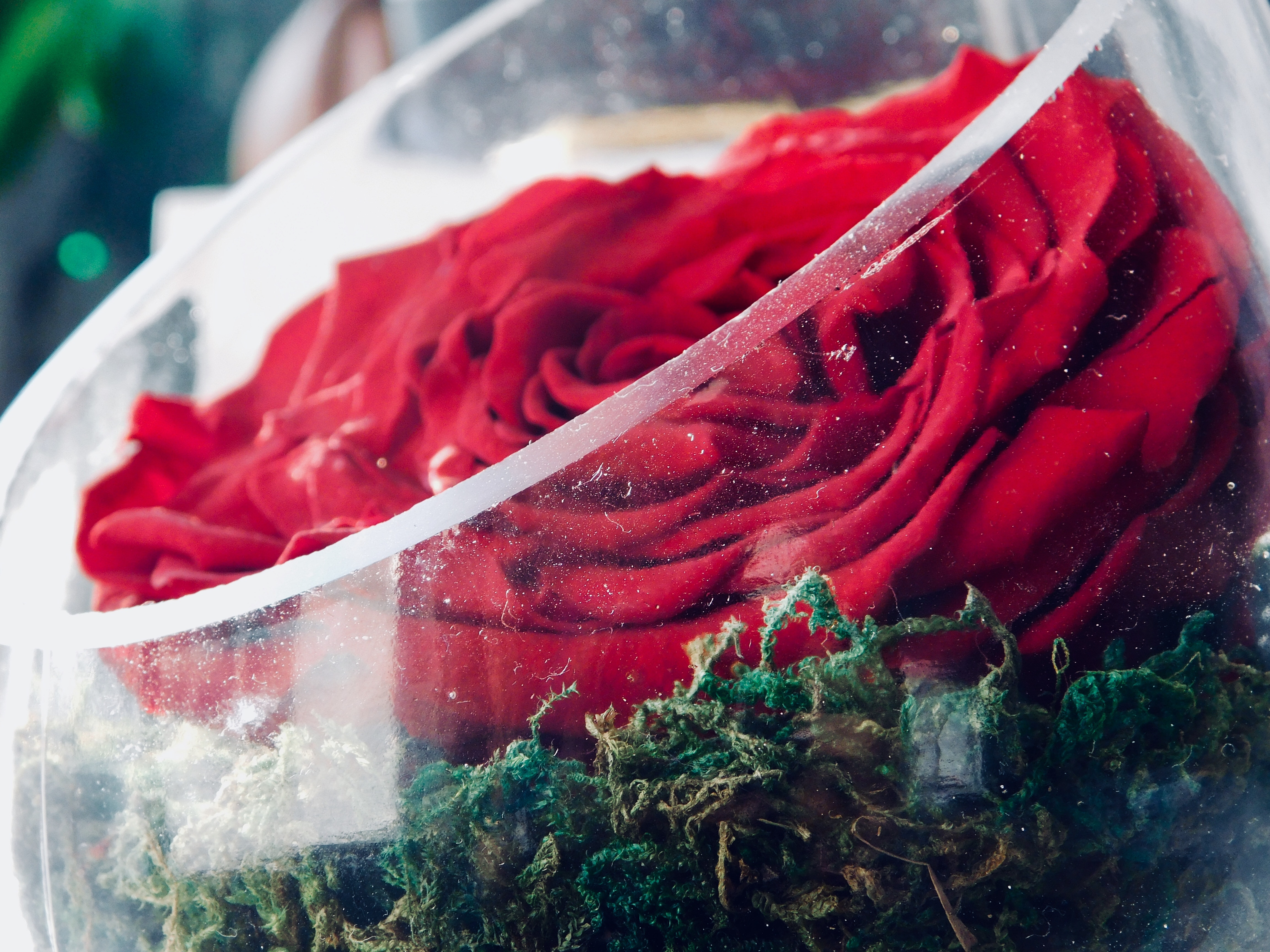 Free stock photo of beautiful flowers crystal glass red rose free download izmirmasajfo