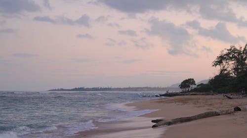 Gratis arkivbilde med bølger, daggry, drivved, hav