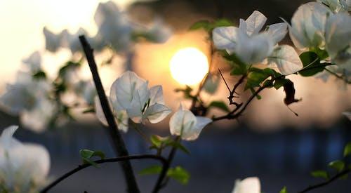 Immagine gratuita di bianco, fiore, impianto, natura