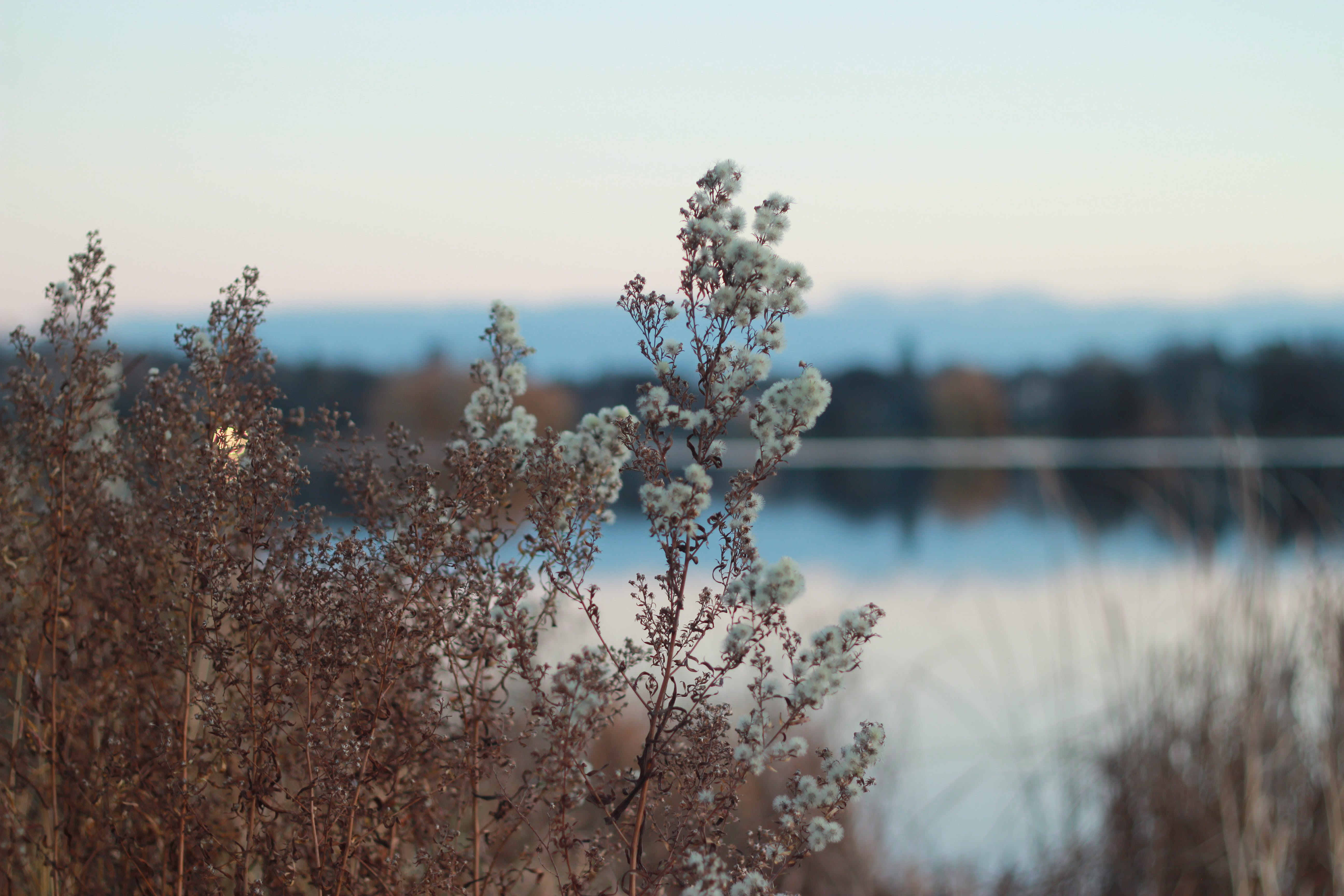 White Petaled Flowers Near Lake Under White Clouds