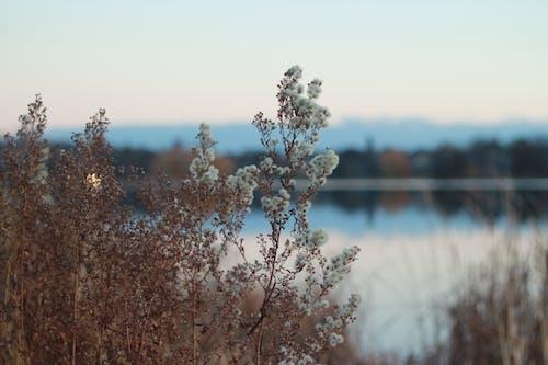 Fotos de stock gratuitas de agua, flores, lago, planta