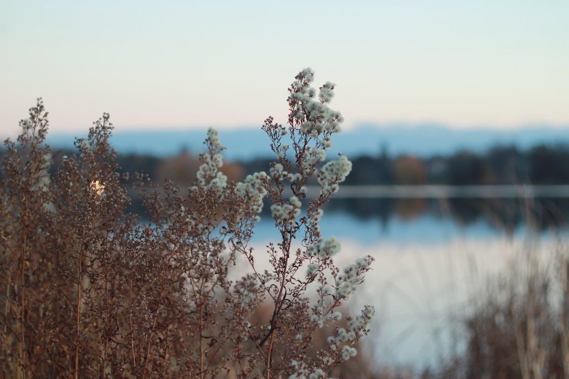 kwiaty, roślina, sceneria