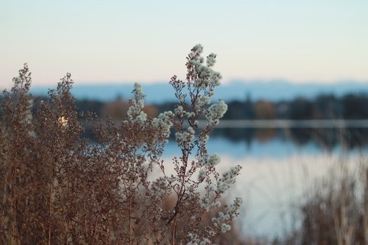 Free stock photo of water, flowers, lake, plant