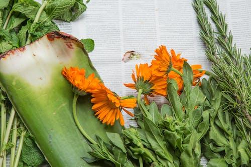 Fotos de stock gratuitas de áloe, flores, periódico