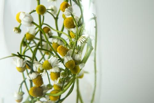 Fotos de stock gratuitas de bonito, brillante, flor, floración