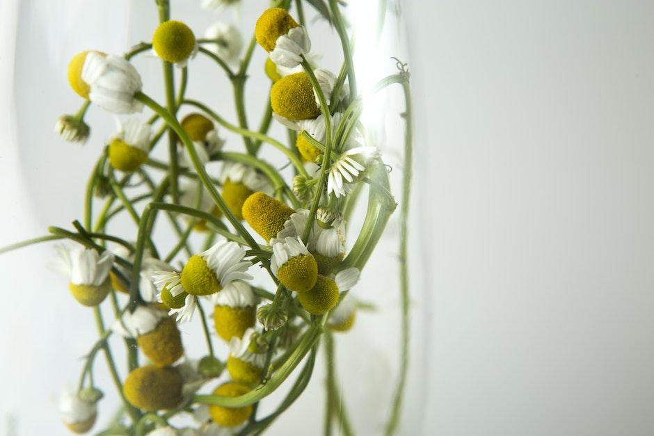 White Multi Petaled Flower