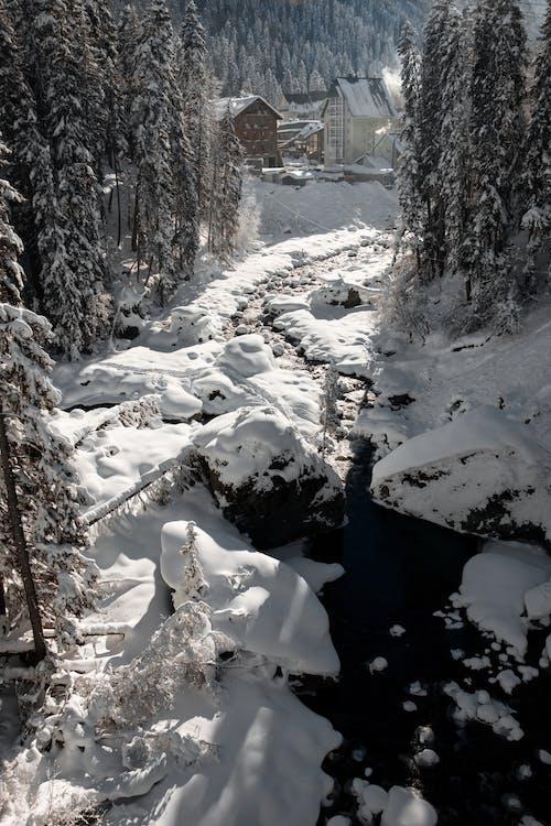 Fotos de stock gratuitas de árbol, clima helado, congelado