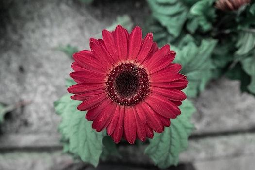 Kostenloses Stock Foto zu rot, sommer, garten, frühling