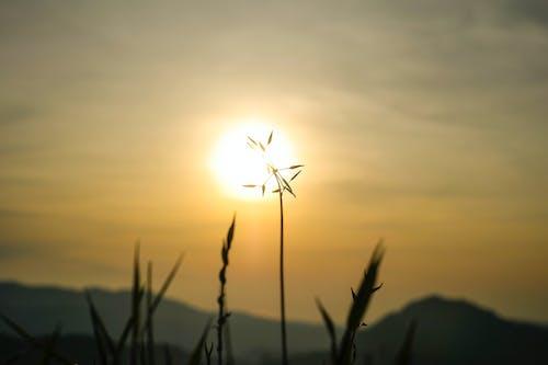 ağaç, gün batımı, güneş ışığı içeren Ücretsiz stok fotoğraf