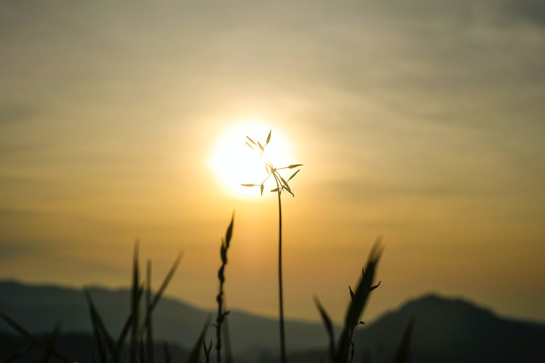 Gratis lagerfoto af morgensol, solnedgang, solskin