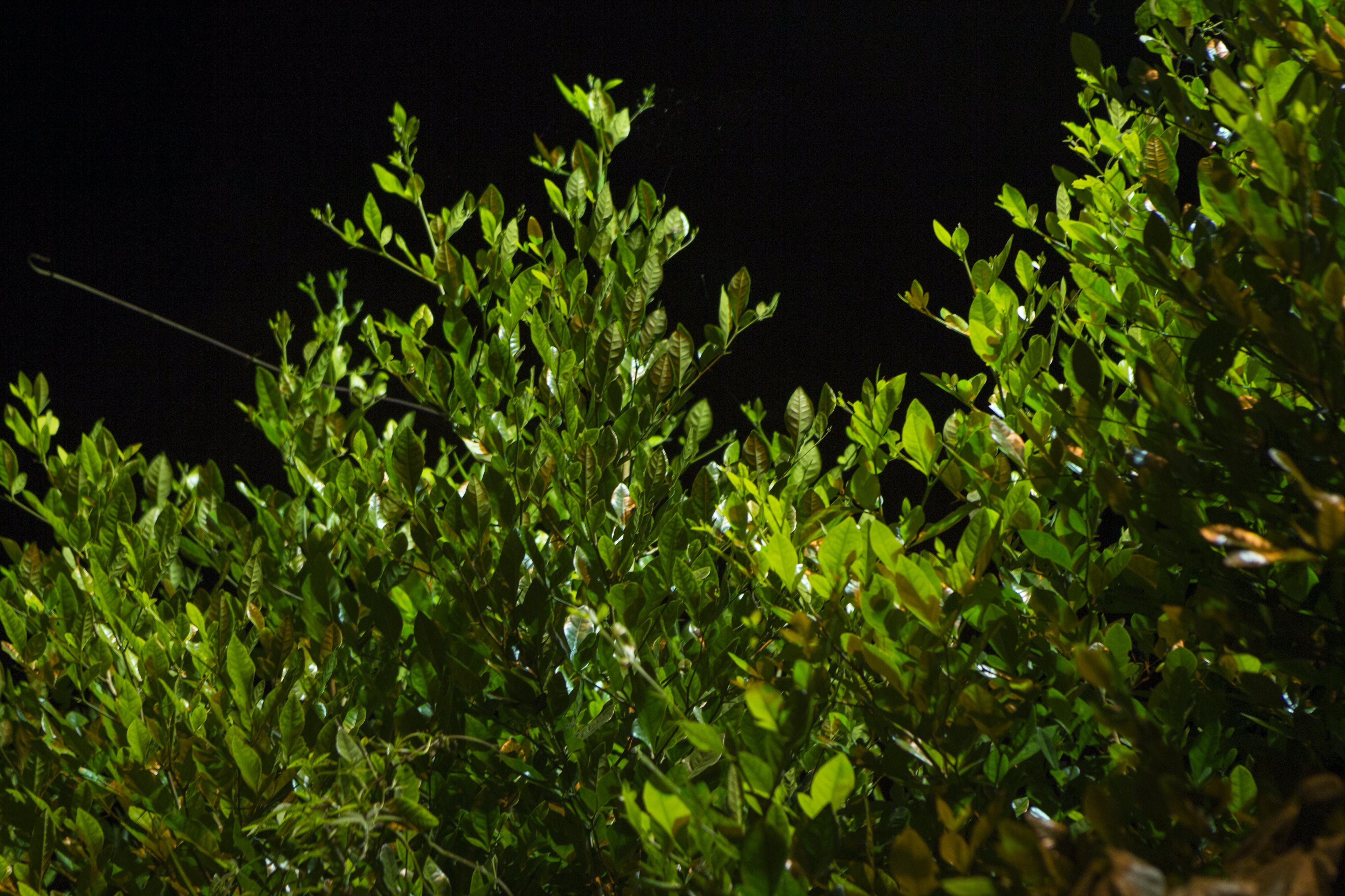Základová fotografie zdarma na téma noc, příroda