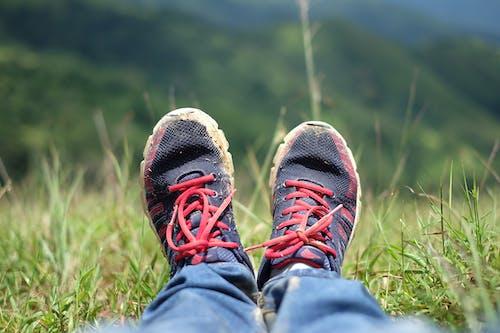 Gratis lagerfoto af græs, trekking