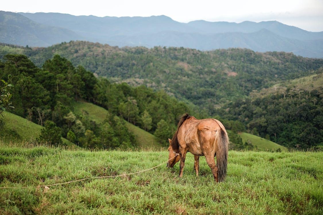 Kostnadsfri bild av gräs, häst, moutain