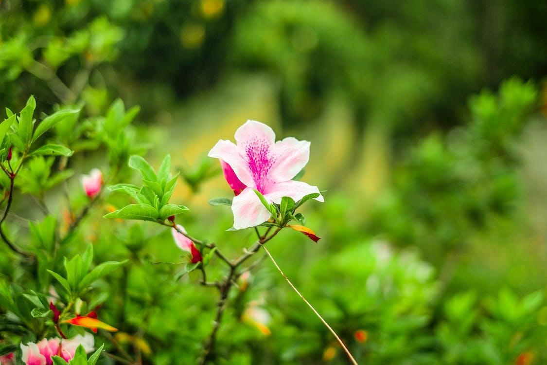 Gratis lagerfoto af blomst, skønhed