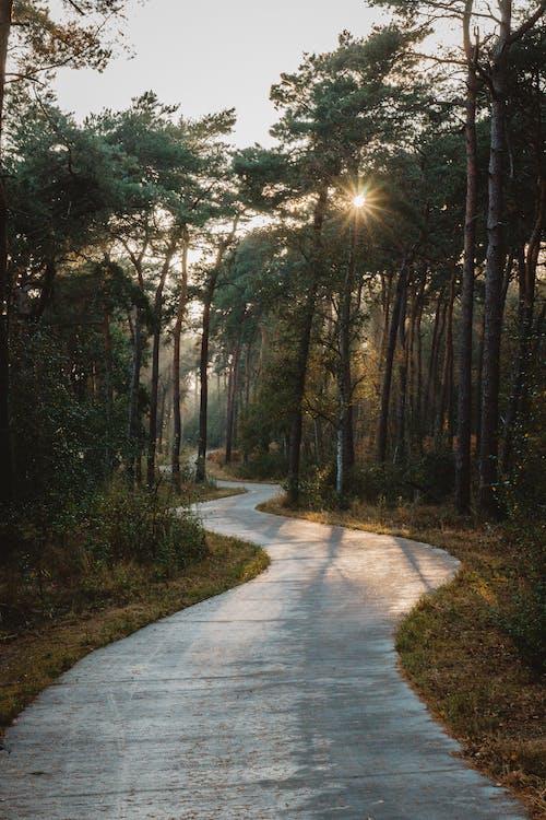 Imagine de stoc gratuită din alee, arbore, bicicletă