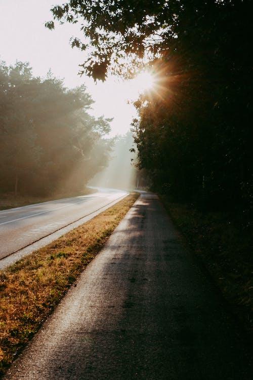 Imagine de stoc gratuită din apus, arbore, asfalt
