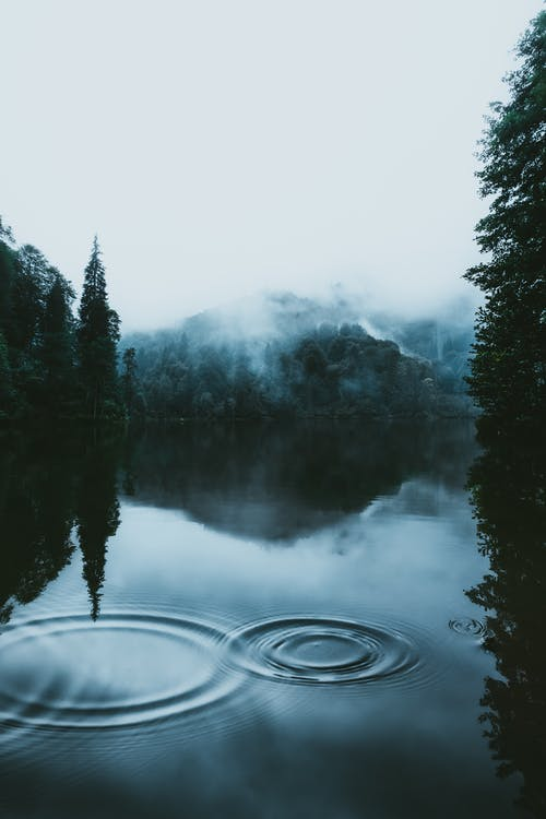Calm lake surrounded by forest in cloudy day