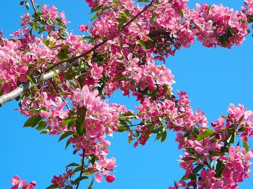 Foto d'estoc gratuïta de arbre, branques, cel, flora