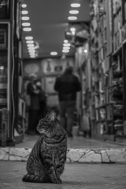 Бесплатное стоковое фото с белый и черный, книжный магазин, кошка