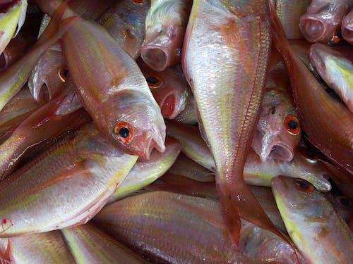 Imagine de stoc gratuită din fructe de mare, mâncare, pescuit, pește