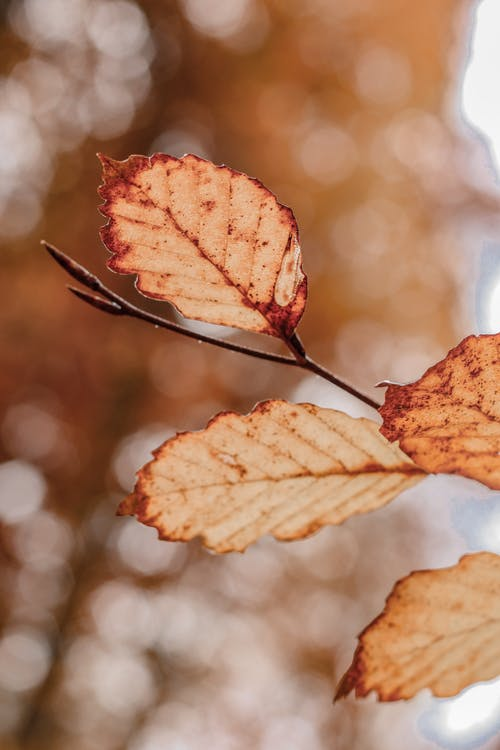Close-up Shot of Leaves At Autumn