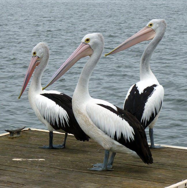 Black And White Long Beak Bird · Free Stock Photo