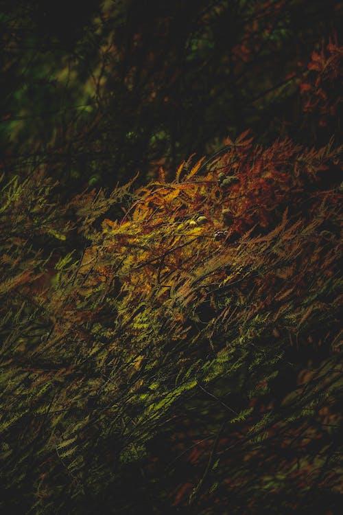 Photos gratuites de à feuilles caduques, angle élevé, arbre