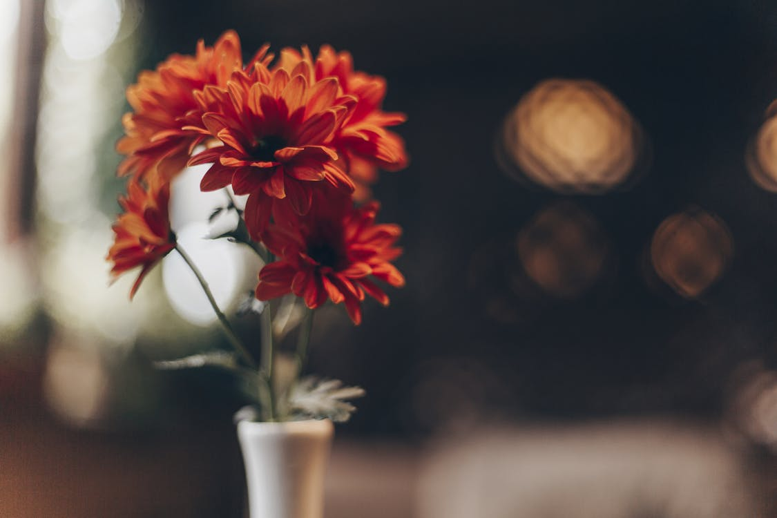 Bunch of orange aromatic Gerbera Daisy flowers placed in simple ceramic vase against blurred  background