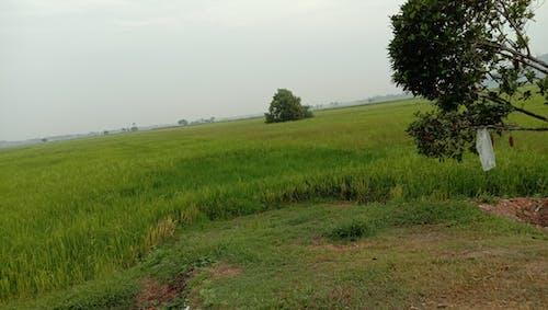 Imagine de stoc gratuită din câmp nedecorticat, sat
