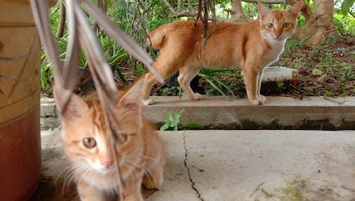 Imagine de stoc gratuită din față de pisică