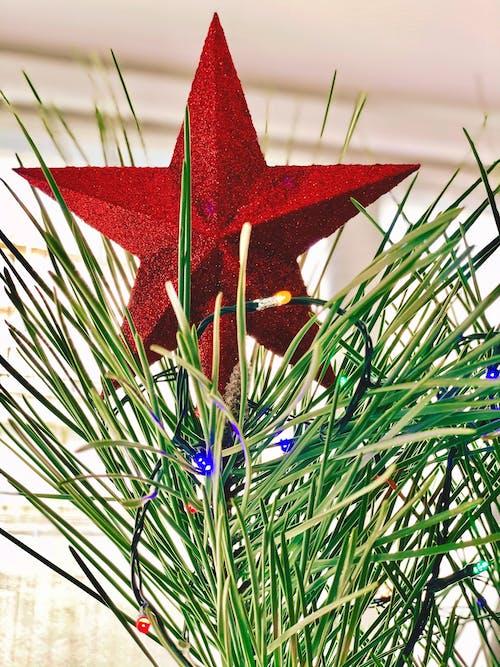 Kostnadsfri bild av jul, julgran, julstämning, julstjärna