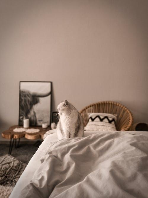 White Cat on White Bed