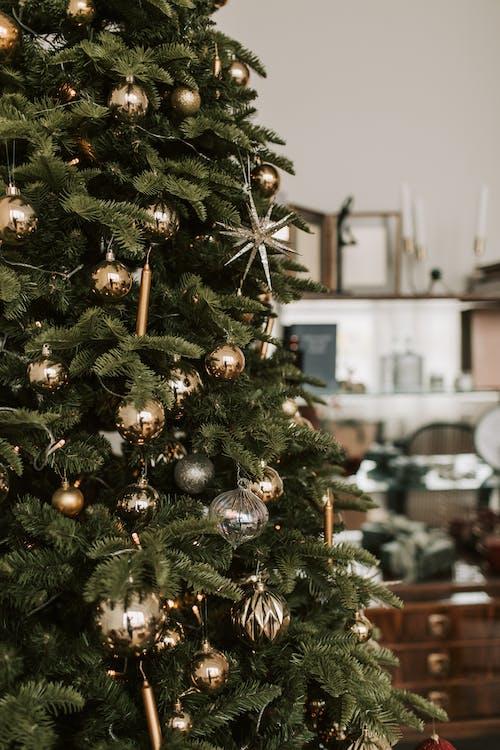 amabilis fir, 來臨, 冬季, 冷杉 的 免費圖庫相片
