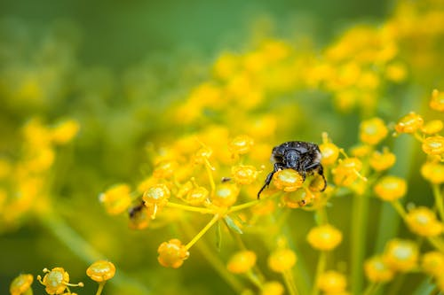 Small bug on yellow flower