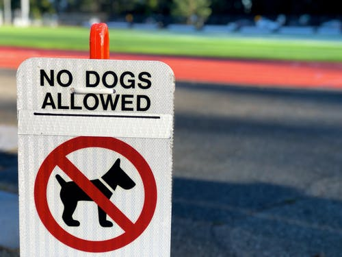 Free stock photo of allowed, ban, canine