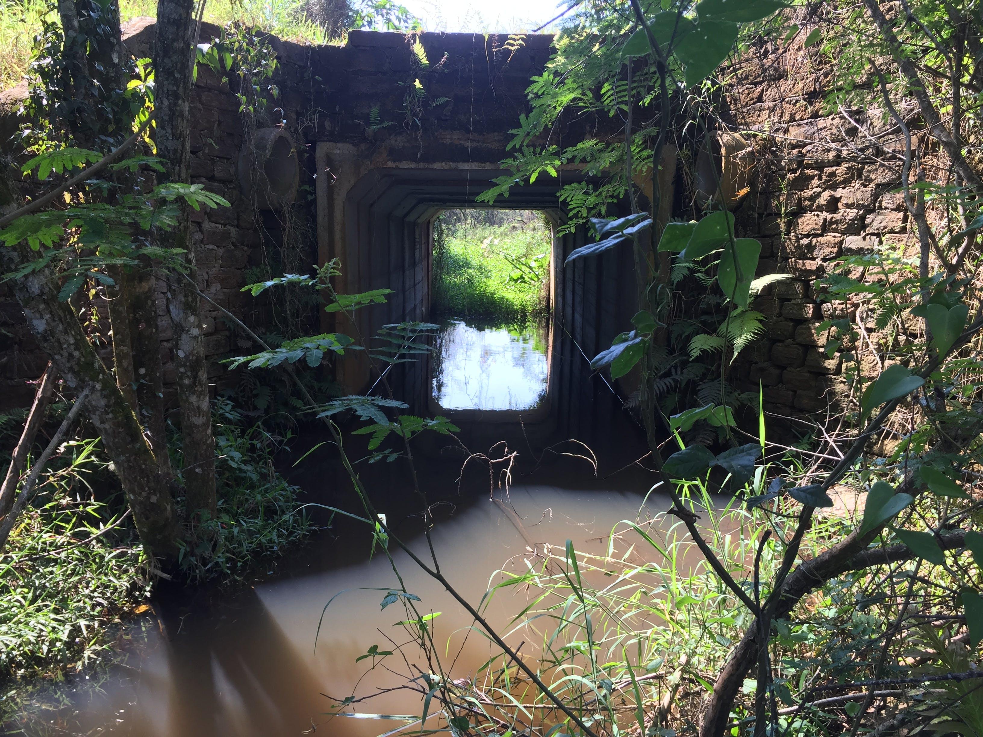 bridge, calm waters, nature