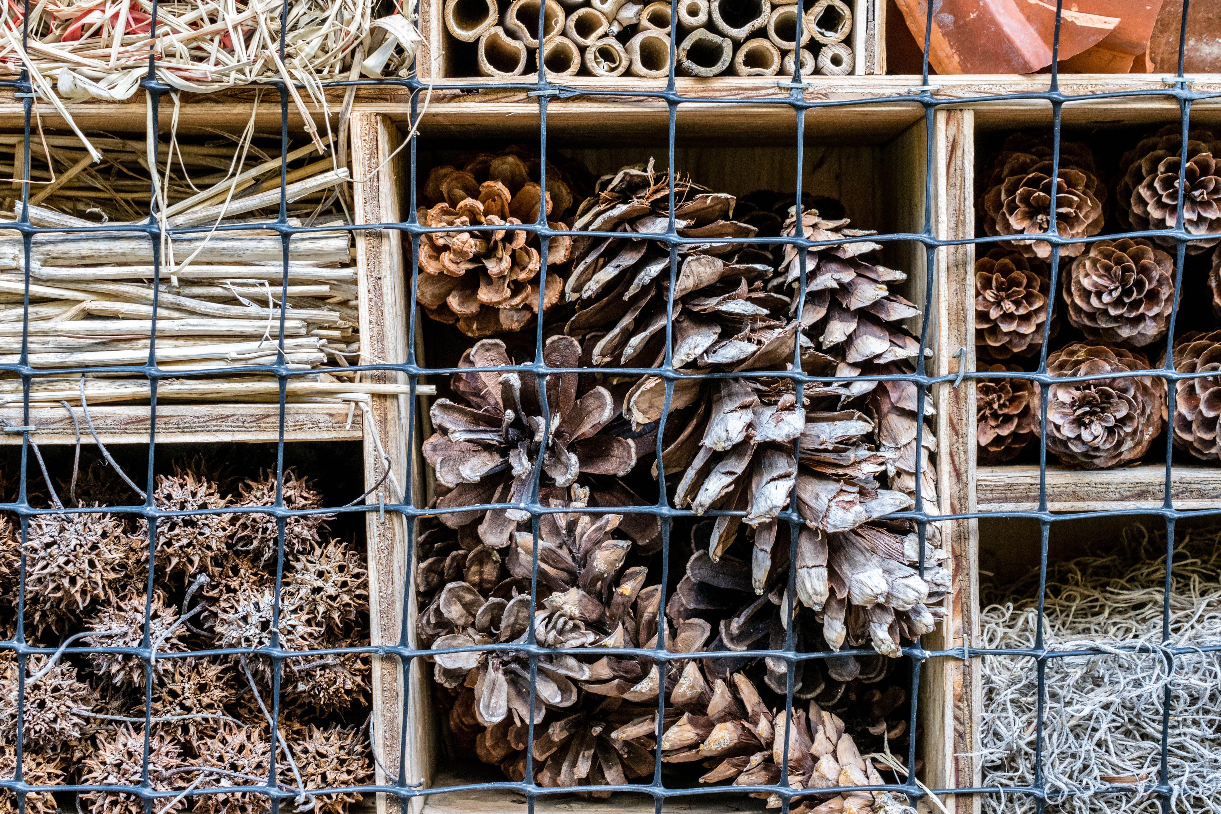 Free stock photo of grid, nature, pinecones, square